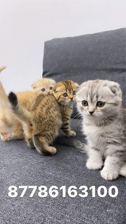 Шотландские плюшки мишки