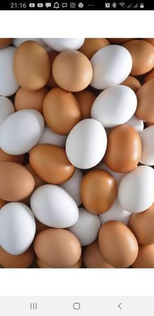 Яйцо яйца куриные оптом и в розн(пр-во Павлодар)ДОСТАВКА кур продукция