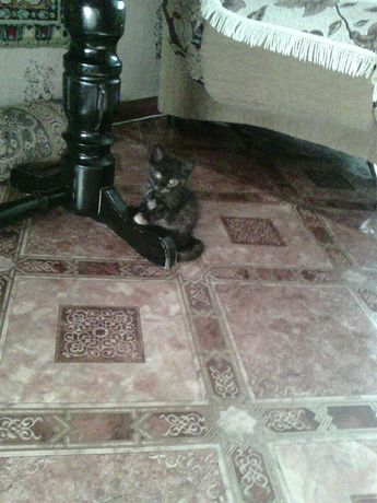 Отдам котят: девочка-Машенька и  мальчик-Мишенька