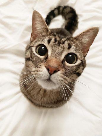 Котенок, девочка 3 месяца