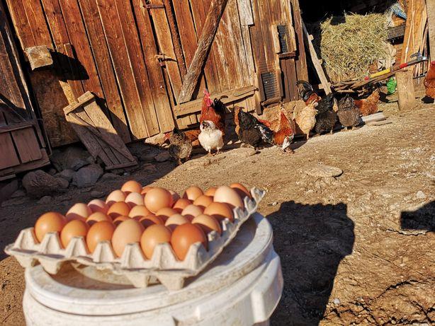 Vând ouă ecologice (0,80leu)