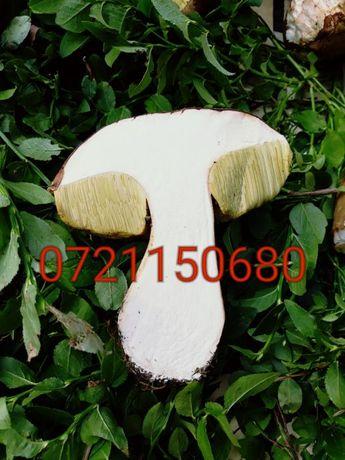 Hribi/ funghi porcini/ ciuperci de padure proaspete, uscate, congelate
