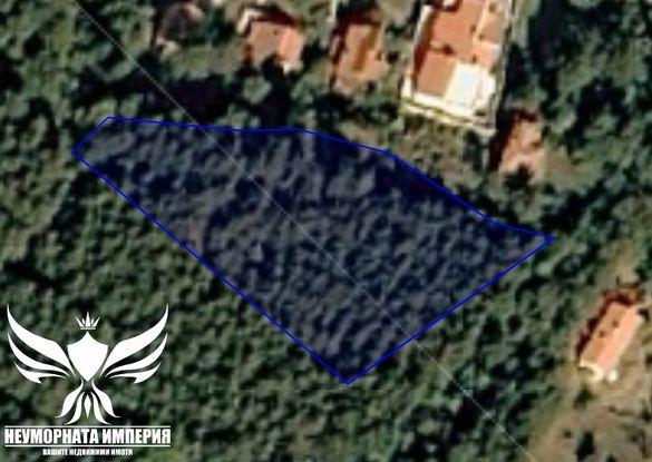 Продавам дървопроизводителна гора 2103 кв. в кв.Долни Воден Асеновград