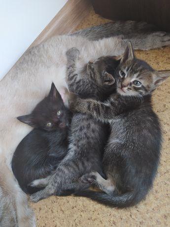 милые Котята 1 месяц