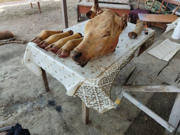 Голова коровы, 2 жасар сиырдын басы
