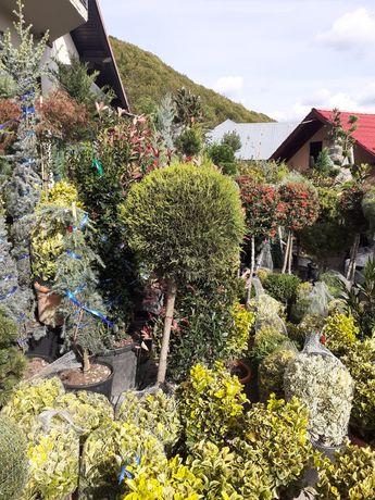 Plante decorative pentru grădina dumneavoastră