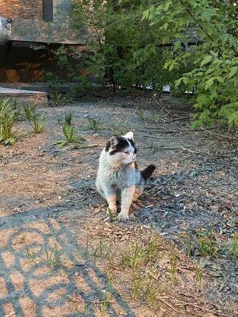 Ищем ответственных хозяев для котика