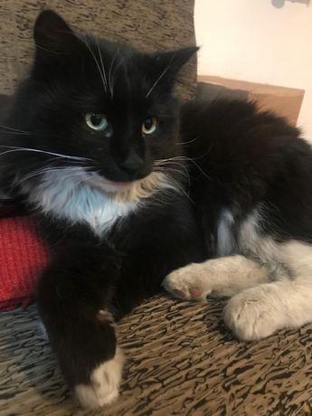 Котик Мурзик в добрые руки!