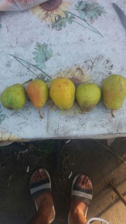 Продам грушу, мягкая, сочная, сладкая. 300 т.