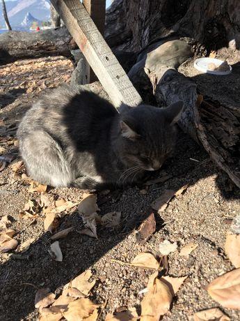 Серый Котик  на центральном  пляже в Боровом