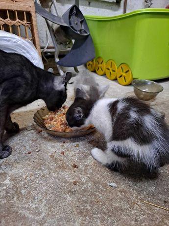 Donez trei pisicute