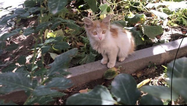 Отдам котенка в хорошие руки, у нас уже есть кошка