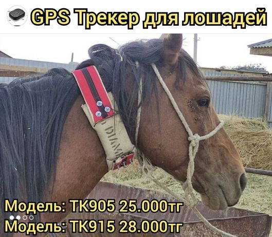 GPS GSM Трекер для отслеживания лошадей скота ЖПС малга Жылкыга трекер