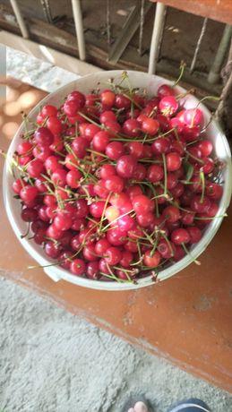 Продаётся  домашняя  вишня  и черешня