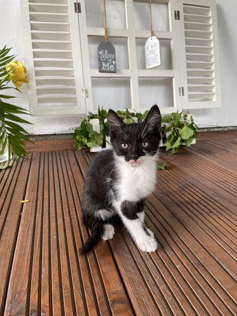 Pui pisica pentru adoptie
