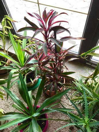 Aloe vera si plante decorative in ghiveci