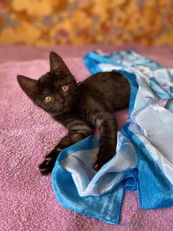 Котенок ищет дом, стерилизуем бесплатно