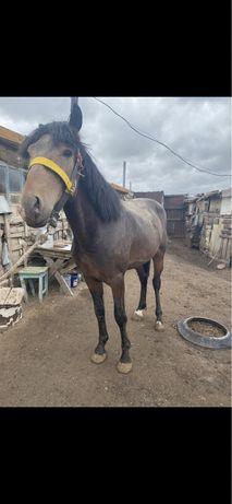 Продам жирных лошадей крс
