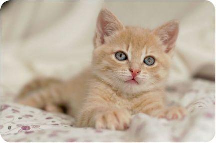 Умные,смелые, ласковые котята - крысоловы