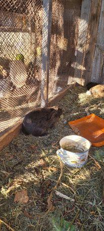 Продам кроликов 4 штуки