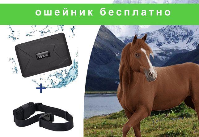 Gps трекер для лошадей/ наблюдения/ 100дней батареи