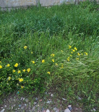 Аренда, огород 3 сотки (супер предложение).