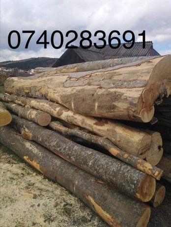 Vând lemne de foc fag în județul Cluj