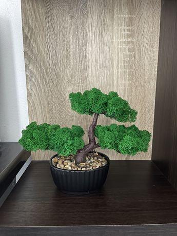 Bonsai din licheni