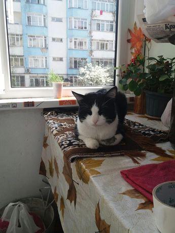 Котик ищет кошечку для вязки