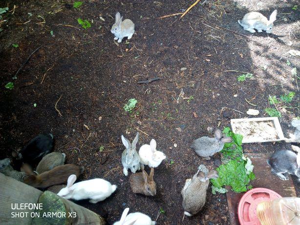 Продам кроликов 3500