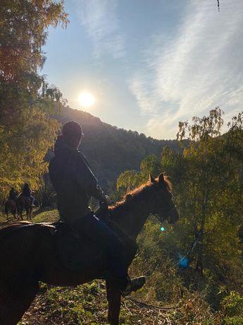 Конные прогулки в горах Заилийского Алатау. Иппотерапия