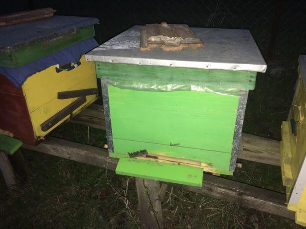 Famili de albine