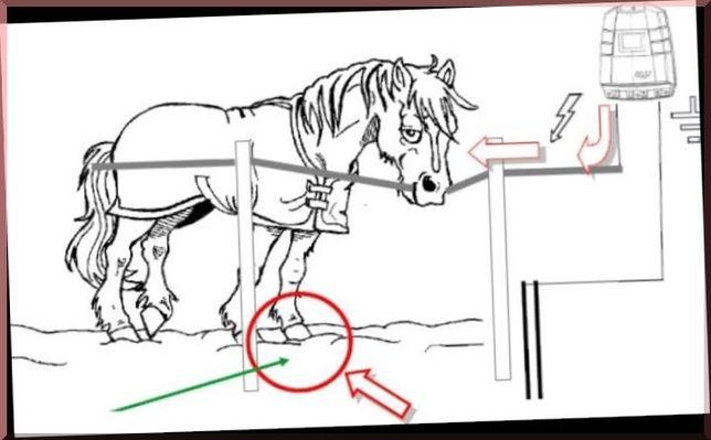Электропастух для крупнорогатого скота