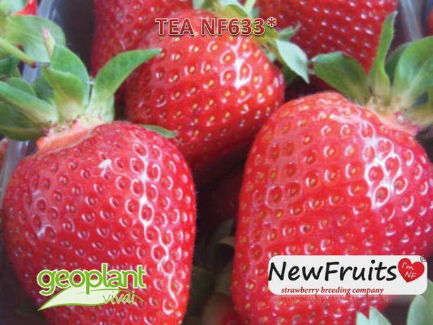 Tea soi nou de stoloni de capsuni primavara 2021