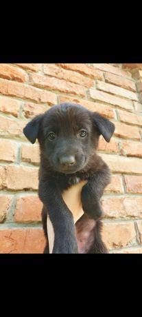 Отдам щенков в очень хорошие руки