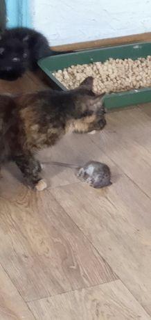 Котята домашние крысоловы