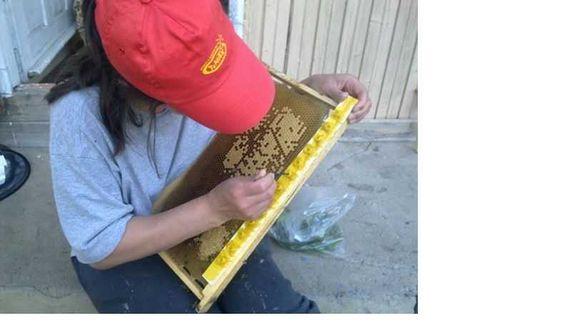 Пчелни майки, отводки и кошери по програмите 2021 ( - 10% )