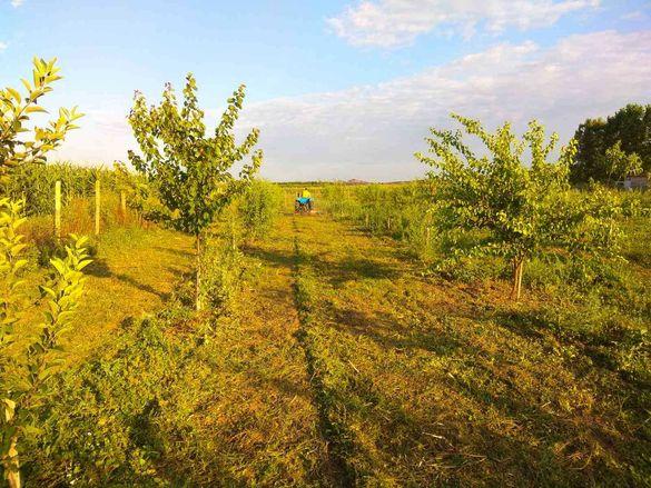 Овощна градина в с. Тънково на 9км от к.к. Слънчев бряг
