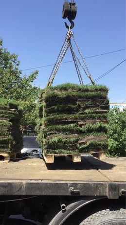 Посев газона,рулонный газон