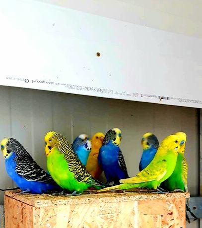 Papagal. Oferta. Animal Companie