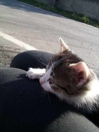 Un pui de pisică își dorește un cămin primitor.