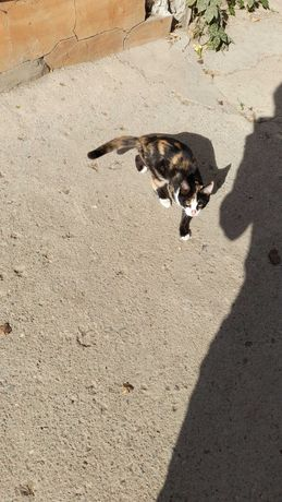 Даром котенок 5 месяцев