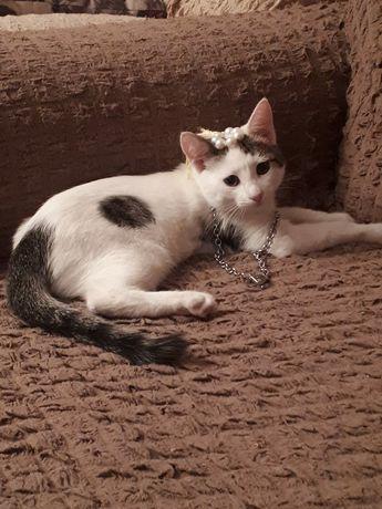 Котёнок 4 месяца