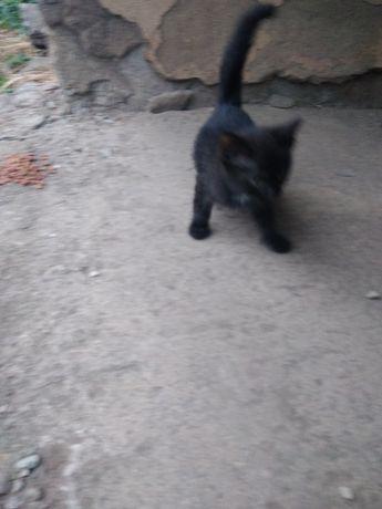 Котенок дворняшка ищет дом,