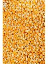 Vand boabe de porumb pret 1,35 lei/kg, floarea soarelui 2.98 lei/kg.