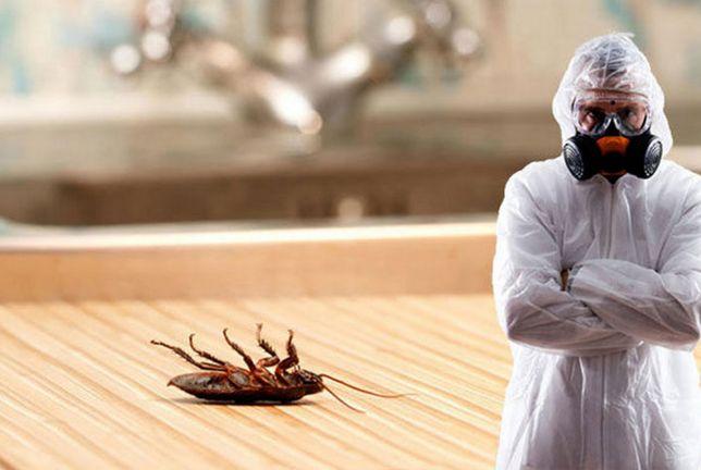 Дезинфекция квартир, ч/д и кафе. Избавление от тараканов и крыс