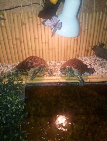 водные черепахи+аквариум