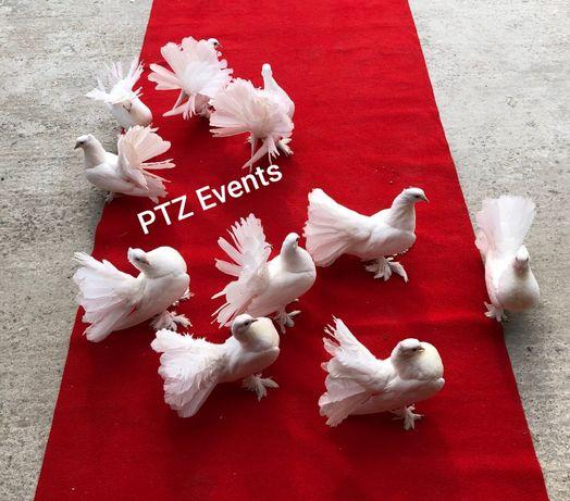 Porumbei albi care stau pe covor si porumbei de eliberat aranjamente