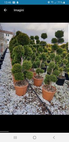 Plante ornamentale , diferite soiuri