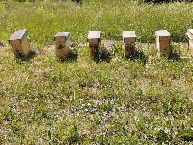 Пчелопакеты карника Ф1